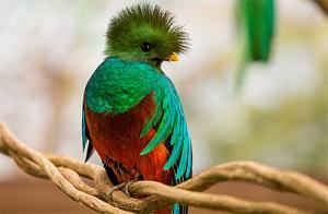 Pulsa en la imagen para verla en tamaño completo  Nombre: RQuetzal-quetzal.jpg Visitas: 292 Tamaño: 35.6 KB ID: 1824
