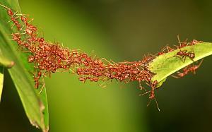 Pulsa en la imagen para verla en tamaño completo  Nombre: hormigaequipo.jpg Visitas: 2032 Tamaño: 74.4 KB ID: 1247
