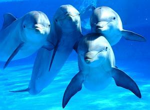 Pulsa en la imagen para verla en tamaño completo  Nombre: delfines0001.jpg Visitas: 460 Tamaño: 59.6 KB ID: 1398