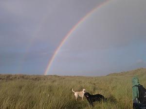 Pulsa en la imagen para verla en tamaño completo  Nombre: perros+puente+arcoiris.jpg Visitas: 39 Tamaño: 23.2 KB ID: 2403
