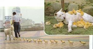 Pulsa en la imagen para verla en tamaño completo  Nombre: 1309125564_animals_love_22.jpg Visitas: 200 Tamaño: 49.7 KB ID: 1853