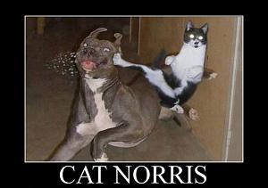 Pulsa en la imagen para verla en tamaño completo  Nombre: cat-norris.jpg Visitas: 214 Tamaño: 36.0 KB ID: 624